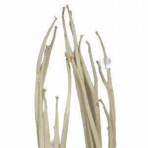 NATUR ARTISCHOCKE PLANT WHITE