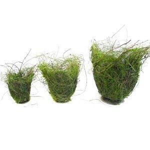 GRAS TOPF MIT REBE AUF