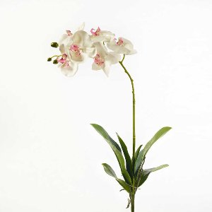 SEIDE ORCHIDEE 6