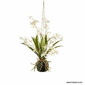 SEIDE ORCHIDEE IN ERDE ZUM