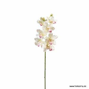SEIDE ORCHIDEE CYMBIDIUM L