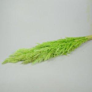 NATUR Eryanthus/ PAMPASGRAS