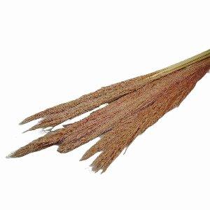 NATUR ZEBRA GRAS 100/120 CM